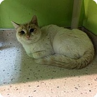 Adopt A Pet :: Kitty Pryde - Janesville, WI