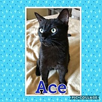 Adopt A Pet :: Ace - Arlington/Ft Worth, TX