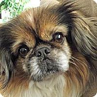 Adopt A Pet :: Prissie-VA - Mays Landing, NJ