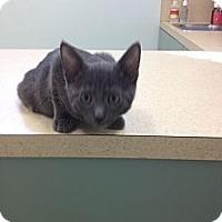 Adopt A Pet :: Mandy - Ft. Lauderdale, FL