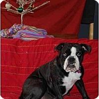 Adopt A Pet :: Nellie - San Diego, CA