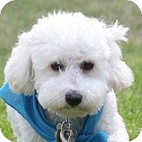 Adopt A Pet :: Sasha - La Costa, CA