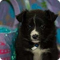 Adopt A Pet :: Alaska - Saskatoon, SK