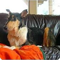Adopt A Pet :: Atti - Gardena, CA