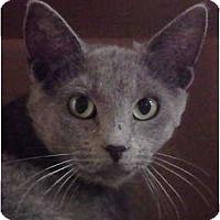 Adopt A Pet :: Hera - McHenry, IL