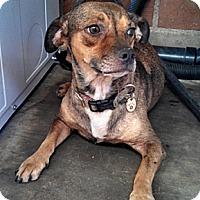 Adopt A Pet :: Mimi - Phoenix, AZ