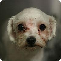Adopt A Pet :: Thai - Canoga Park, CA