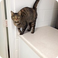 Adopt A Pet :: Jane - Lancaster, VA