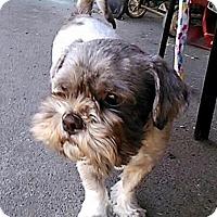 Adopt A Pet :: Mojo - Salem, OR