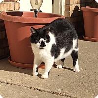 Adopt A Pet :: Dufyss Delight - Ortonville, MI