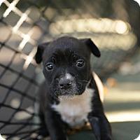 Adopt A Pet :: Breckenridge - San Antonio, TX