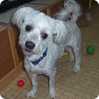 Adopt A Pet :: ELI - Medford, WI