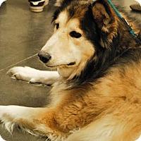 Adopt A Pet :: Lena 1 - Brooklyn Center, MN