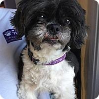 Adopt A Pet :: Jagger Ranger - Urbana, OH