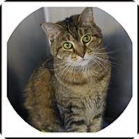 Adopt A Pet :: C-65660 Bella **In Foster** - Westampton, NJ