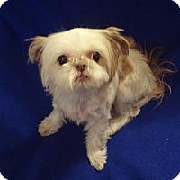 Adopt A Pet :: Molly - Memphis, TN