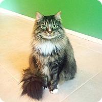 Adopt A Pet :: Jack - Marlton, NJ