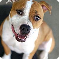 Adopt A Pet :: Juliet - Berkeley, CA