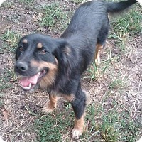 Adopt A Pet :: Bella - Blacksburg, SC