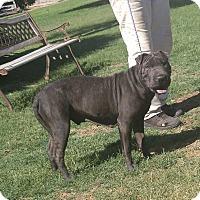 Adopt A Pet :: Delilah - Mira Loma, CA
