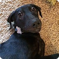 Adopt A Pet :: Munich - Fort Collins, CO