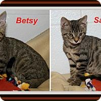 Adopt A Pet :: Betsy & Sammy - Marietta, OH