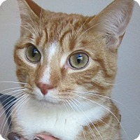 Adopt A Pet :: Yunnan - Menomonie, WI