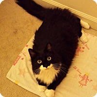 Adopt A Pet :: Kimmy - Absecon, NJ