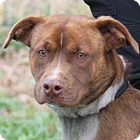 Adopt A Pet :: Izzy - Marietta, OH