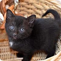 Adopt A Pet :: Austin - Bristol, CT