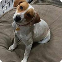 Adopt A Pet :: Prada - Mesa, AZ