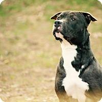 Adopt A Pet :: Runner - Calgary, AB