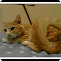 Adopt A Pet :: Mickk - Trevose, PA