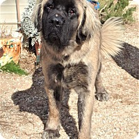 Adopt A Pet :: Chewy - Rosamond, CA