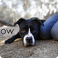 Adopt A Pet :: Willow - Palm Springs, CA