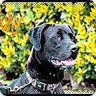 Adopt A Pet :: LUCKY (CP)