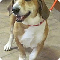 Adopt A Pet :: Lucy Ball - Barrington, IL
