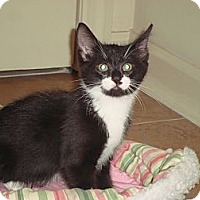 Adopt A Pet :: Dewey (KL) - Little Falls, NJ