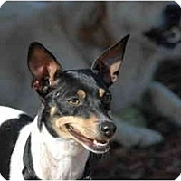 Adopt A Pet :: Trixy - Ft. Myers, FL