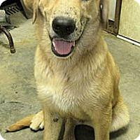 Adopt A Pet :: *Maverick - PENDING - Westport, CT