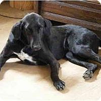 Adopt A Pet :: Chauncey - Gonzales, TX