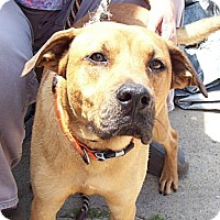 Adopt A Pet :: BUDDY BOY - Glastonbury, CT