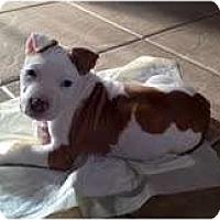 Adopt A Pet :: Angus - Rowlett, TX