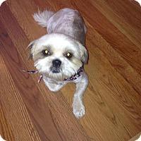 Adopt A Pet :: Buffy - Hazard, KY