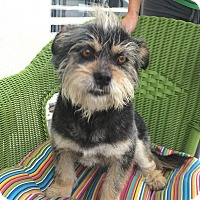 Adopt A Pet :: Lager - Van Nuys, CA