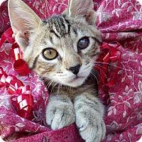 Adopt A Pet :: Tarzan - Scottsdale, AZ