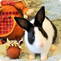 Adopt A Pet :: Cooper - Hillside, NJ