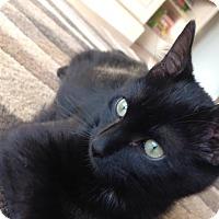 Adopt A Pet :: Mikey- COURTESY POST - St. Louis, MO