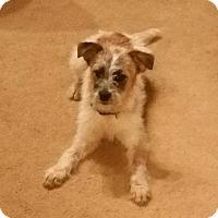 Adopt A Pet :: NUTMEG - Gustine, CA