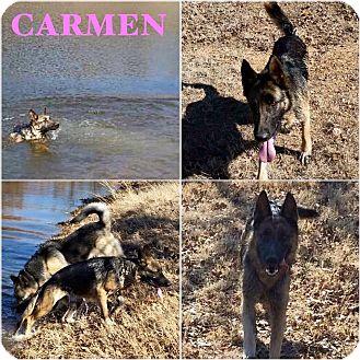 German Shepherd Dog Mix Dog for adoption in Fort Worth, Texas - Carmen